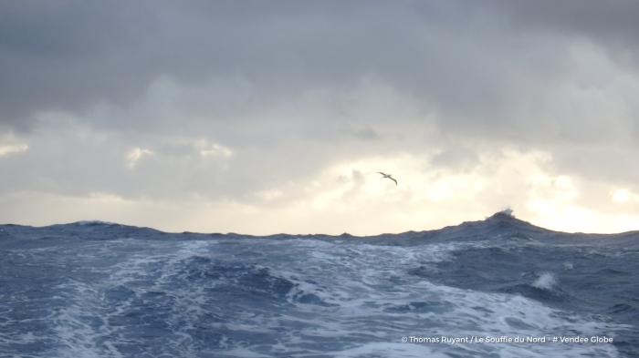 Photo sent from the boat Le Souffle du Nord, on November 30th, 2016 - Photo Thomas Ruyant Photo envoyée depuis le bateau Le Souffle du Nord le 30 Novembre 2016 - Photo Thomas Ruyant Albatros